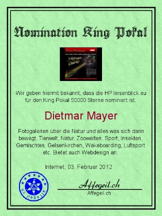 King Award Nominationsurkunde Linsenblick